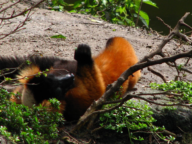 West palm beach zoo coupons