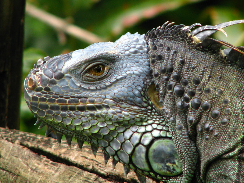 The West Palm Beach Zoo