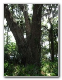 Parks Ford Gainesville >> Palm Point Nature Park Pictures & Visitor Information ...