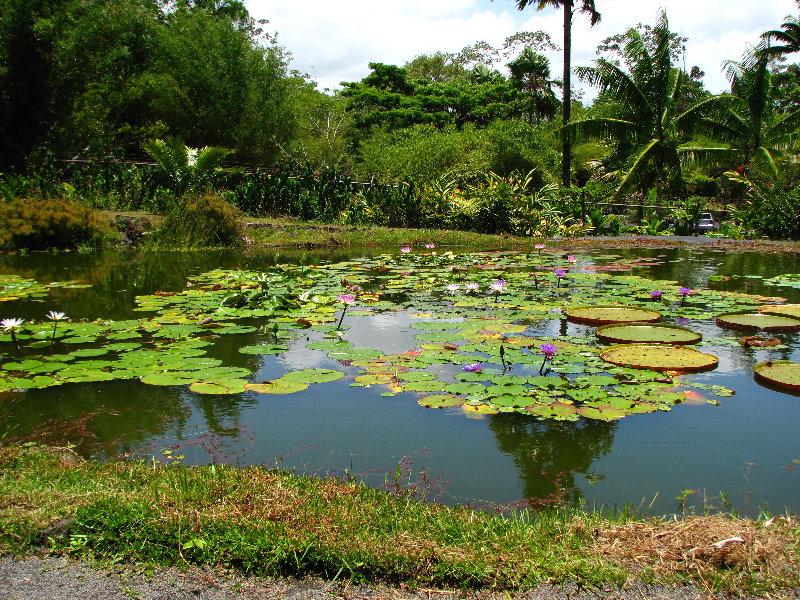 Rainforest On The Big Island: Trópusi Esőerdők Világa