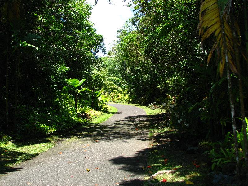 Rainforest On The Big Island: Panaewa-Rainforest-Zoo-and-Gardens-Hilo-Big-Island-Hawaii-007