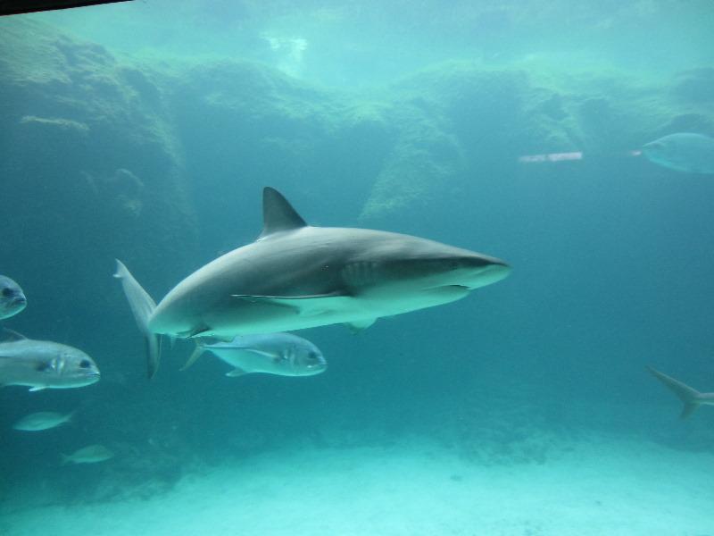 Predator lagoon underwater tunnel sharks atlantis bahamas 031