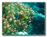 Rainbow Reef Scuba Diving - Taveuni Island