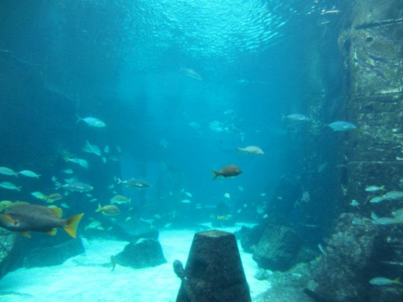 Download The-Dig-Atlantis-Resort-Paradise-Island-Bahamas-005