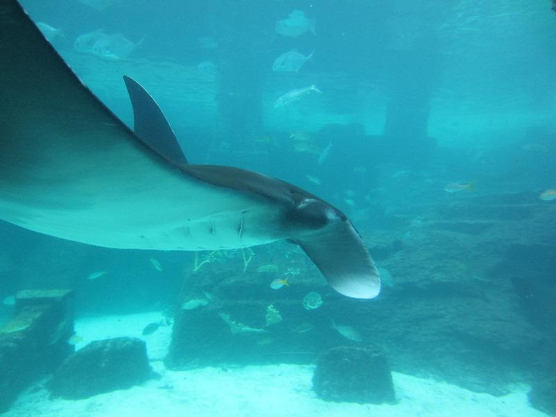Download The-Dig-Atlantis-Resort-Paradise-Island-Bahamas-023