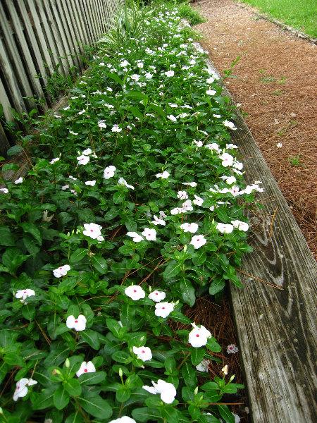 Usf Botanical Gardens Tampa Fl 014