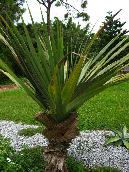 Usf Botanical Gardens Tampa Fl 040