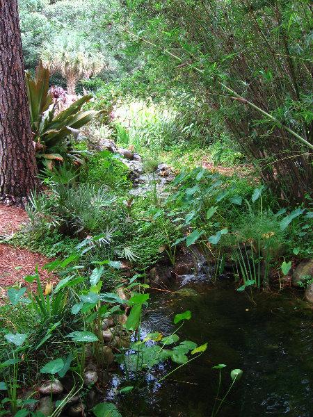 USF Botanical Gardens Tampa FL 048