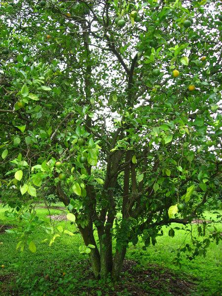 Usf Botanical Gardens Tampa Fl 065
