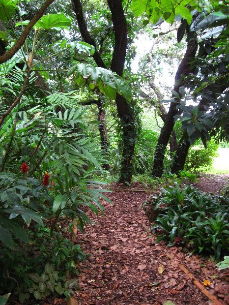 usf botanical gardens tampa fl 087