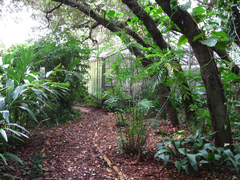 Usf Botanical Gardens Tampa Fl 092